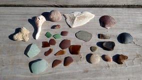 Tesouros do mar Fotos de Stock
