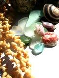 Tesouros do oceano Imagens de Stock Royalty Free