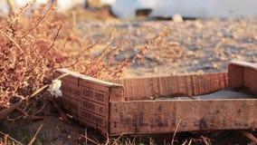 Tesouros na areia imagens de stock