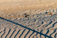 Tessellata кости змейки или ужа на песке Стоковое Изображение