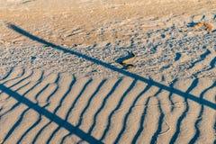 Tessellata кости змейки или ужа на песке Стоковые Фотографии RF