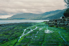 Tessellated Pavement in Pirates Bay. View of Tessellated Pavement in Pirates Bay, Tasmania Royalty Free Stock Photos
