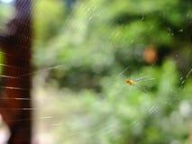Tessitura del ragno Immagine Stock Libera da Diritti