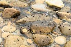 Tessons de roche image libre de droits