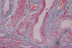 Tessuto colonnare semplice dell'epitelio del campione istologico sotto il microscopio fotografia stock libera da diritti