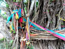 Tessuto del legame dell'albero di Bodhi Fotografia Stock Libera da Diritti
