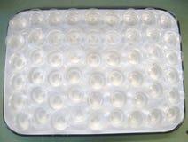 Test di tossicità acuto della dafnia Fotografia Stock Libera da Diritti