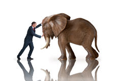 Test of strength concept. Businessman pushing against an elephant royalty free stock photos