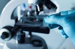 Test tar prov för mikroskop royaltyfria foton