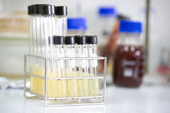 Test tube. For bacteria culture Stock Images