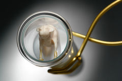 Test Tube Calf in Genetic Science research Lab Stock Image