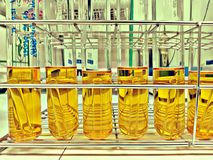 Test tube of LST broth for coliform test in food factory lab royalty free stock image