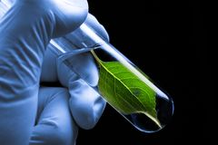 Test tube with plant Royalty Free Stock Photo