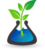 Test tube plant Royalty Free Stock Image