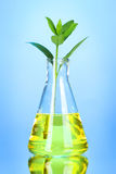 Test tube with plants Royalty Free Stock Images