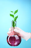 Test tube with plants Stock Images