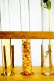 Test Tube Rack Stock Photography