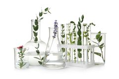 Free Test Tubes And Other Laboratory Glassware With Plants On White Background Stock Photo - 162145250