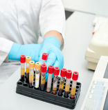 Test tubes with blood Royalty Free Stock Images
