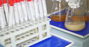 Test tubes and Erlenmeyer flasks being mixed, with some food and beverage examples in them
