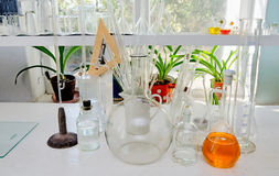 Test tubes and flasks in the chemical laboratory Stock Images