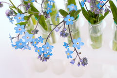 Test-tubes with flowers Royalty Free Stock Image