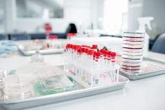 Test tubes with Petri dishes in bacteriological department. Test tubes with Petri dishes on the table in bacteriological department of laboratory Royalty Free Stock Photo