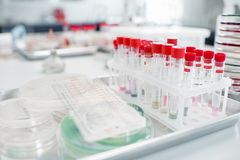 Test tubes with Petri dishes in bacteriological department. Test tubes with Petri dishes on the table in bacteriological department of laboratory Royalty Free Stock Photos