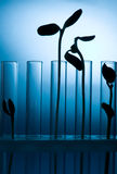 Test tubes with plants Royalty Free Stock Images