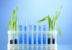 Test tubes with plants Stock Photos