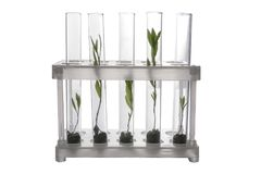 Test tubes with plants in holder Royalty Free Stock Photo