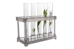 Test tubes with plants in holder Stock Images