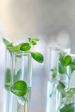 Test Tubes with small plants Royalty Free Stock Photography