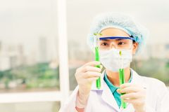 Test tubes with sprouts Royalty Free Stock Photo