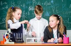 Test tubes with substances. Formal education. Girls and boy student conduct school experiment with liquids. School. Laboratory. Group school pupils study royalty free stock photos