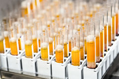 Test-tubes with yellow liquid in the laboratory. Medical research Royalty Free Stock Image