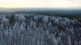 Testa aerea regolare sopra il fuco cinematografico di inverno sparato della foresta norvegese a Oslo al tramonto Metraggio volant video d archivio