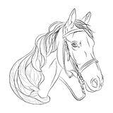 testa bianca del nero del cavallo simbolo di libertà royalty illustrazione gratis