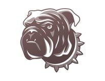 Testa britannica del bulldog isolata su fondo bianco Fotografia Stock Libera da Diritti