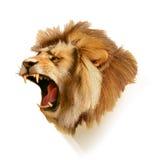 Testa d'urlo del leone illustrazione di stock