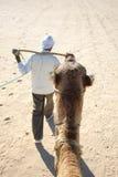 Testa dei cammelli Fotografia Stock