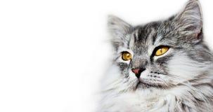 Testa dei gatti Immagine Stock
