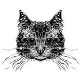 Testa dei gatti Fotografia Stock