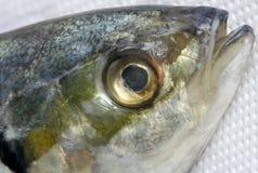 Testa dei pesci Fotografia Stock
