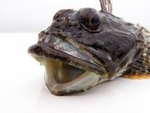 Testa dei pesci Fotografie Stock