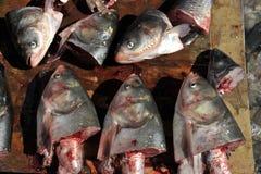 Testa dei pesci crudi Fotografia Stock Libera da Diritti