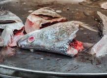 Testa dei pesci freschi Fotografie Stock
