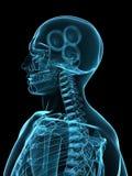 Testa dei raggi X con gli attrezzi Immagine Stock