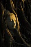 Testa del Buddha in albero Fotografia Stock