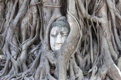 Testa del Buddha in albero Fotografie Stock Libere da Diritti